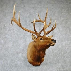 elk-shoulder